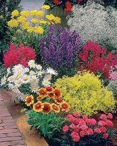 Plantes Vivaces Pour Massif : 39 massif fleuri facile 39 8 plantes vivaces willemse ~ Premium-room.com Idées de Décoration