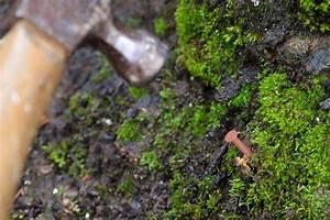 Tuer Un Arbre Avec De L Acide : comment tuer des arbres avec du cuivre nails maison et ~ Dailycaller-alerts.com Idées de Décoration
