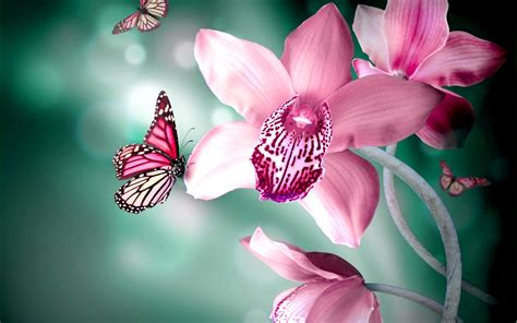 We hope you enjoy our growing collection of hd images. 39+ Pink Butterfly Wallpaper Flower on WallpaperSafari