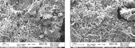 bio cement secretions extrusions  territories