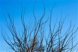 Wann Apfelbäume Schneiden : apfelbaum schneiden den richtigen zeitpunkt finden ~ Lizthompson.info Haus und Dekorationen