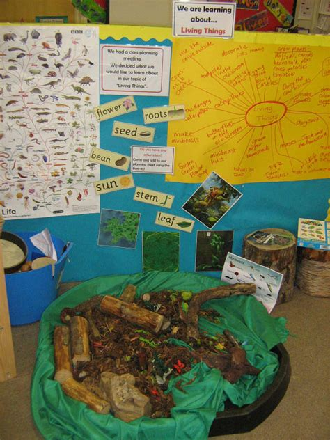 living  display classroom displays flowers minibeasts