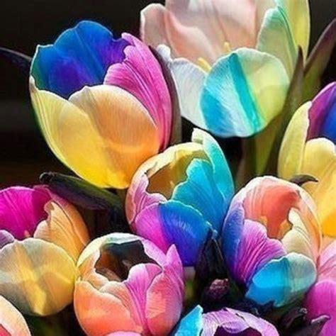 other plants seeds bulbs 5pcs 5pcs yard rare tulip bulbs seeds rainbow flower potted bonsai garden plants ebay
