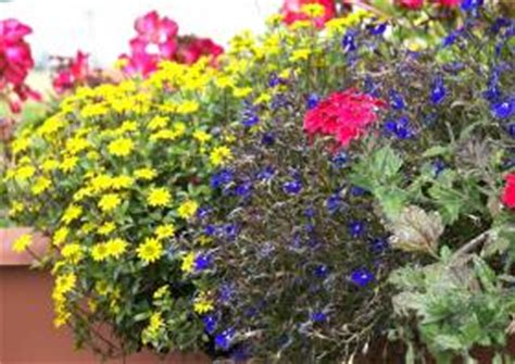 sommerbepflanzung balkon balkonbepflanzung im sommer