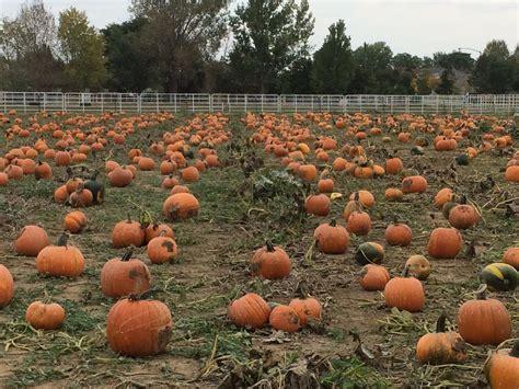 Colorado Pumpkin Patches 2017 by The Denver Colorado Area Pumpkin Patches Corn Mazes