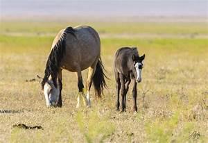 Photographs of Onaqui Herd Wild Horses - May 2017 ...  Wild