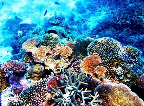 Great Barrier Reef | Series 'Top 13 most colorful and picturesque places on the planet ...