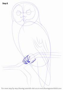 Learn How To Draw A Tawny Owl  Owls  Step By Step