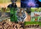 Animal Kingdom: Classification of Animals into Phyla ...