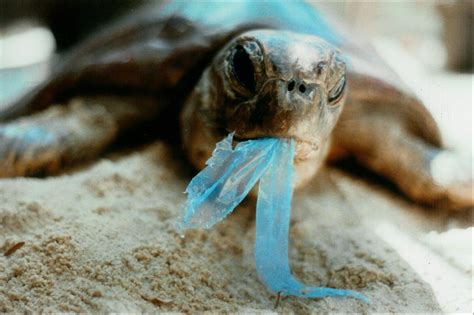 These 5 Marine Animals Are Dying Because Of Our Plastic
