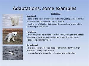 Adaptations of organisms - ppt video online download