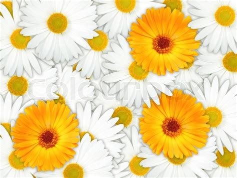 Background Of Orange And White Flowers  Stock Photo. Mirrors For Living Room Uk. Apple White Living Room. Cafe 21 Living Room Singapore. Living Room Staircase Pictures. Front Living Room Campers. Living Room Table Sets Free Shipping. Living Room Furniture History. Living Room Cafe College Area