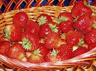 Baby Fruit Strawberries