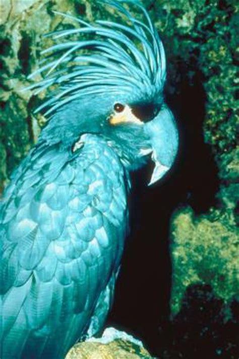 types  cockatoos pets