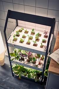 Hydrokultur Pflanzen Kaufen : hydrokultur system kaufen table basse relevable ~ Buech-reservation.com Haus und Dekorationen