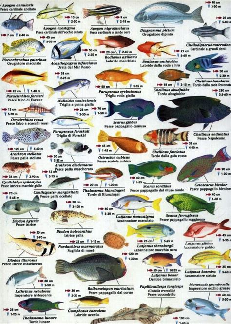 indian ocean fish wwwfishinaddictcom marine fish sea