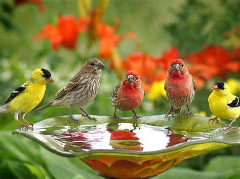 High Resolution Fall Foliage Pictures Birds Wallpapers Cute Birds Drink Water Wallpapers13 Com