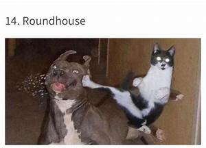 Best 50+ Funny Cat VS Dog Memes Images To Prove Who's Boss – Quotations and Quotes