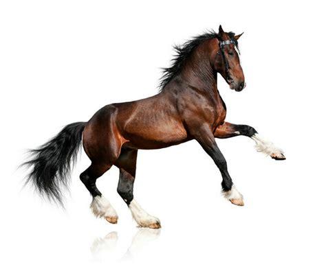 骏马高清图片-动物图片-高清图片-素彩网