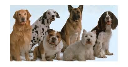 Perros Rottweiler Tienda Precios Madrid Cachorros Rated