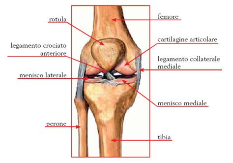 Dolori Ginocchio Interno - il ginocchio come riconoscere e combattere patologie