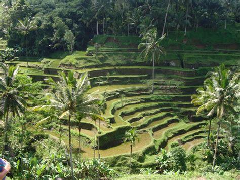 wisata  ubud bali  tempat wisata foto gambar