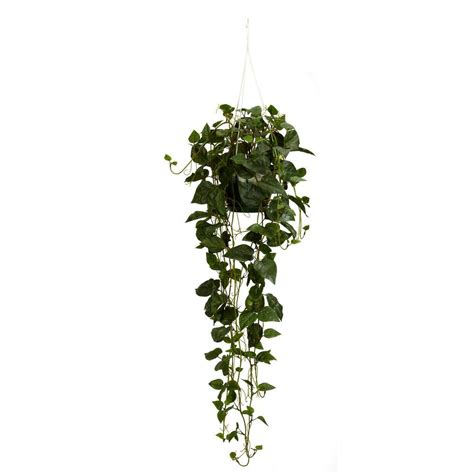 hanging vine plants nearly natural 44 in h green philodendron hanging basket silk plant 4762 the home depot