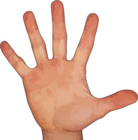 Five Fingers by Finger Thumb Index 183 Free Vector Graphic On Pixabay