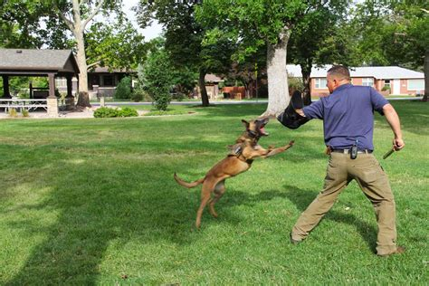 personal protection dog trainer utah county dog training