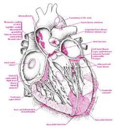 ... Disease - Cardiovascular Disease and Healthy Diet - DISEASE DIET INFO Cardiovascular Diseases And Disorders