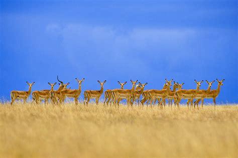 africa photography exhibition  washington dc