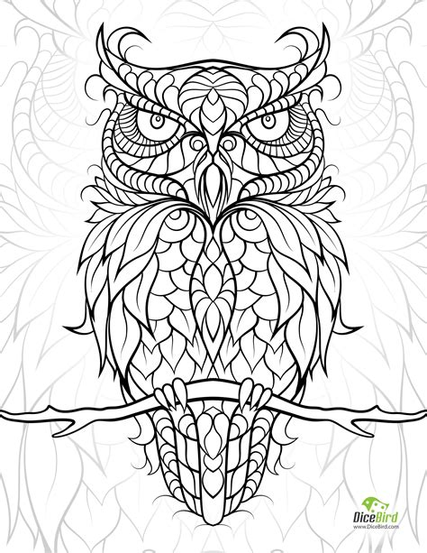 Owl | Owl coloring pages, Free adult coloring pages, Bird