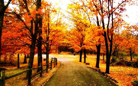 Beautiful Autumn Trees Wallpapers by Wallpapers Background Beautiful Trees Park Nature
