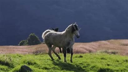 Horse Wild Animals Spirit