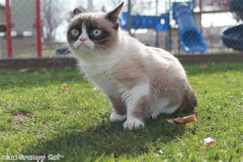 Grumpy Cat Has An Agent, And Now A Movie Deal