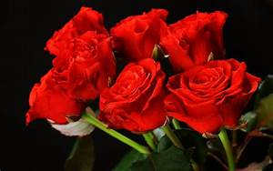 Red Roses Flower Bouquet Love Romance Emotions Girls ...