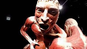 Body World Exhibit 2018 Inside The human Body Skin ...