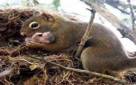 cuisine et vous bébé écureuil