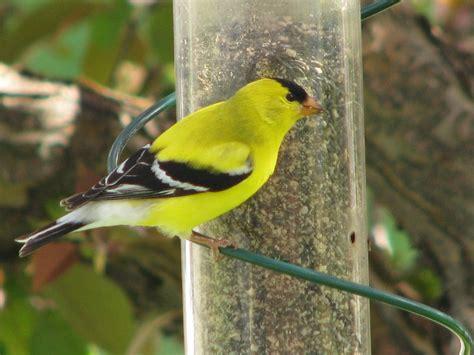 birds in backyards bird finder 28 images birds in