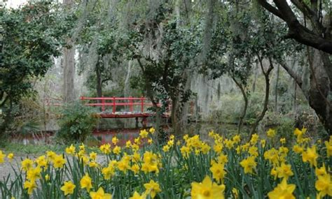 magnolia plantation gardens charleston area cvb