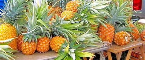 Hawaii Pineapple Fresh from Your Hawaii Vacation