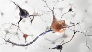 Unexpected Discovery Gives New Model For Studying Brain