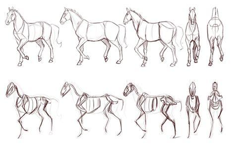 drawing animals tutorials art reference   draw animal