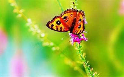 Bright Desktop Colorful Wallpapers Butterfly Pixelstalk