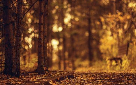 brown bench blurred nature wallpapers hd desktop