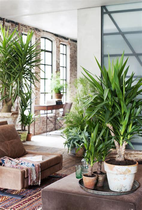 januari  yucca  woonplant van de maand bloemenbureau