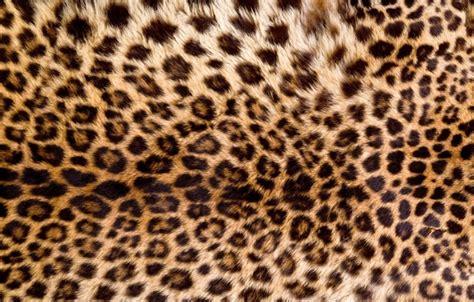 Animal Fur Wallpaper - wallpaper skin fur leopard texture animal fur images