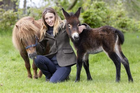 donkey pony shetland mini mule miniature crossed meet baby stories swns