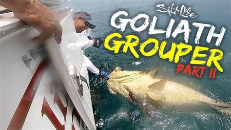 salt goliath grouper
