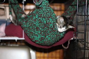 Crochet Cat Hammock by 41 Best My Crafts And Things Images On Cat